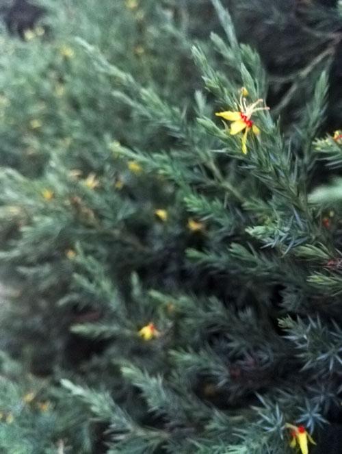 路边柏树和小花